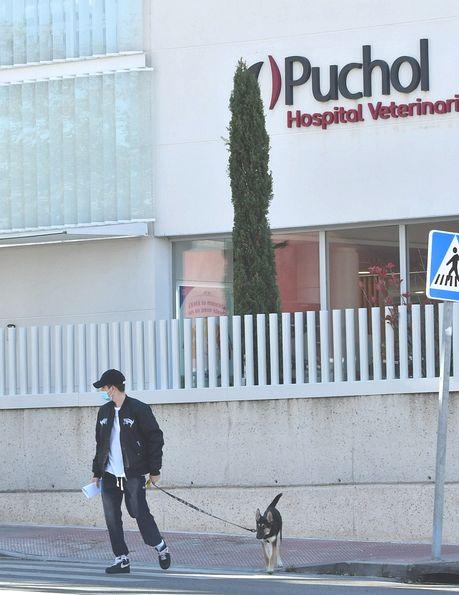 Miguel Bernardeau lleva a la perra de su novia al veterinario