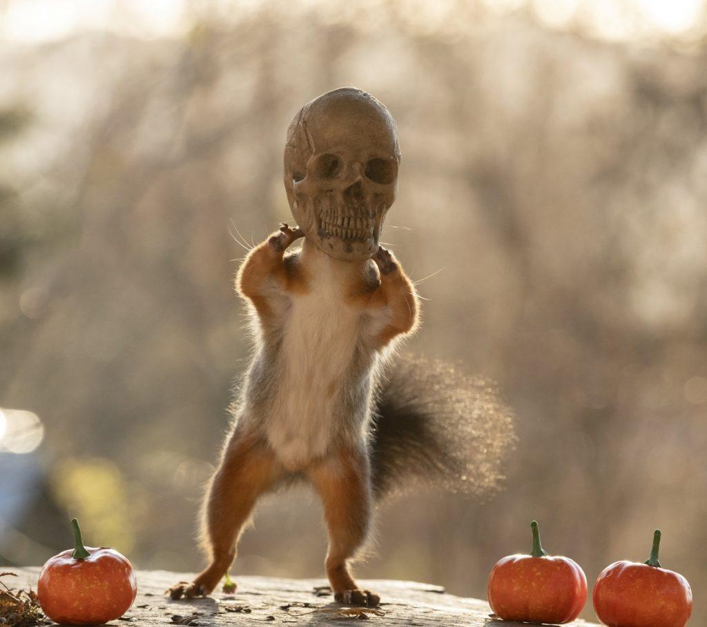Ardilla con cabeza de esqueleto en la imaginaria peli Halloween y las ardillas