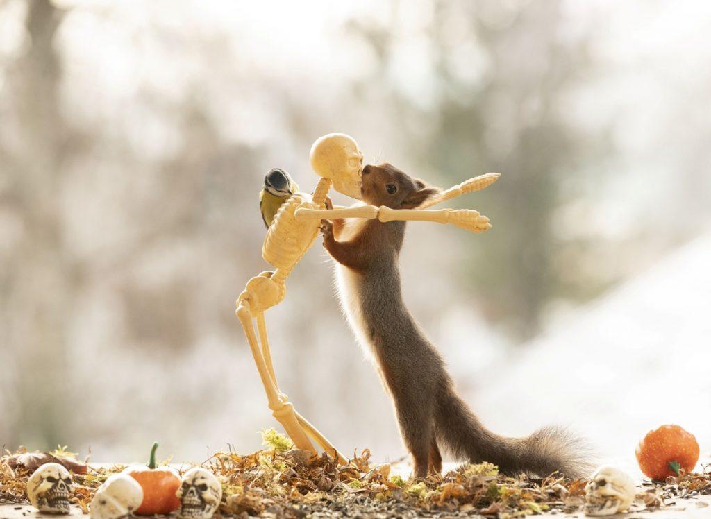 Ardilla besa a esqueleto en la peli imaginaria Halloween y las ardillas