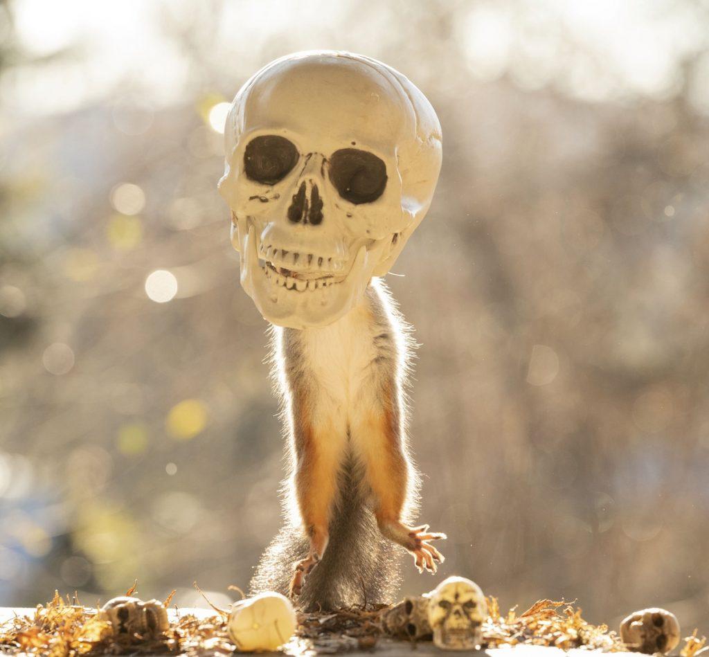 Ardilla con cabeza de esqueleto