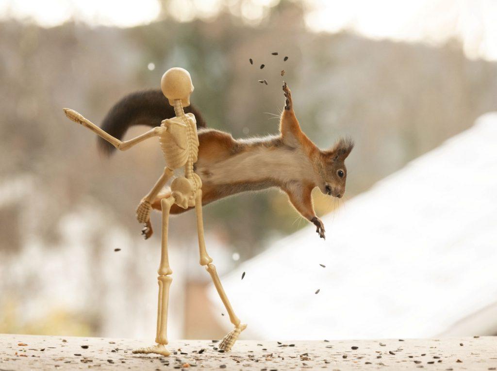 Ardilla volando frente a esqueleto en la peli imaginaria Halloween y las ardillas
