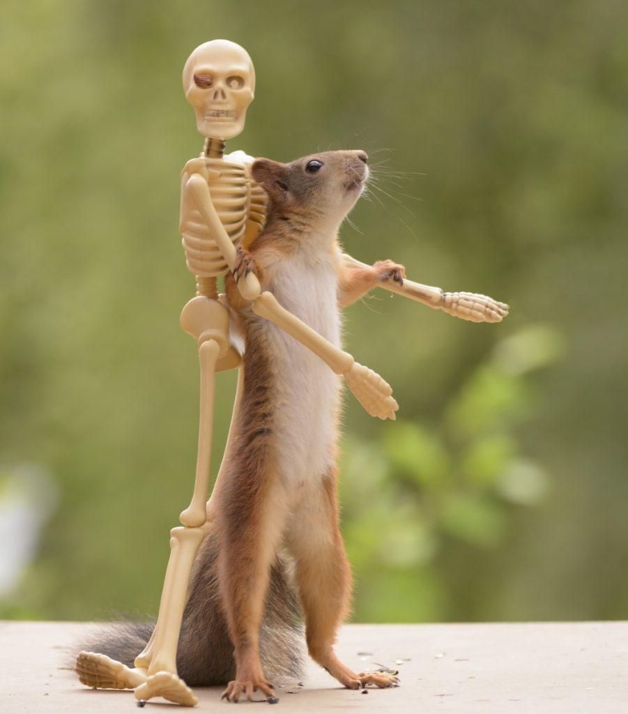 Ardilla con un esqueleto en la imaginaria peli Halloween y las ardillas