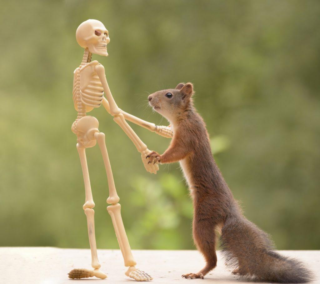 Ardilla baila con esqueleto en la imaginaria peli Halloween y las ardillas