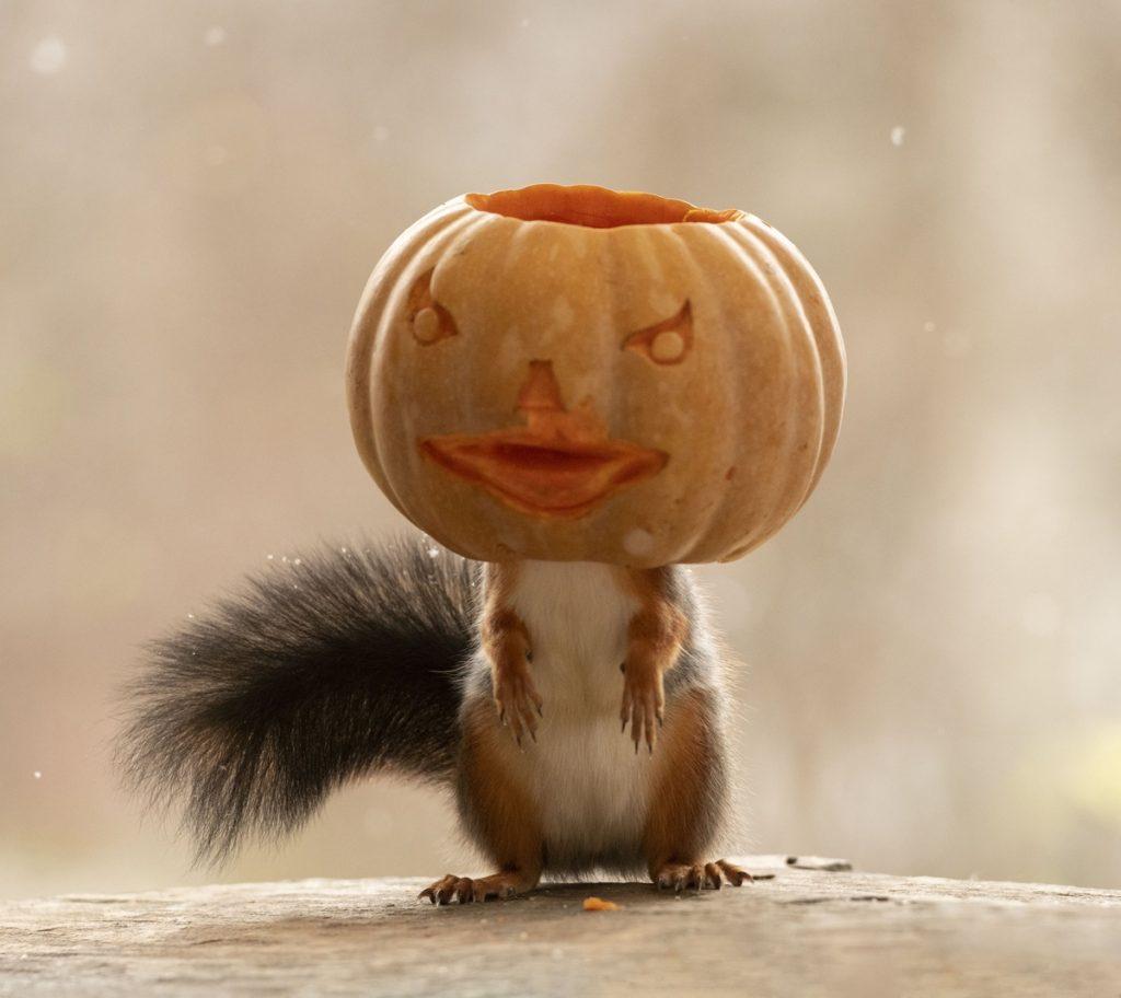 Ardilla con una calabaza en la cabeza en la imaginaria peli Halloween y las ardillas