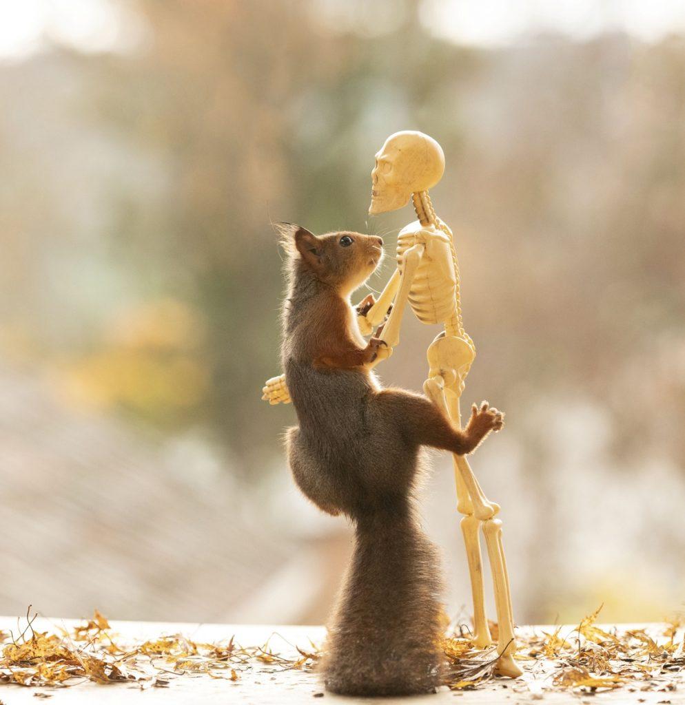 Fotograma de Halloween y las ardillas: la ardilla baila con un esqueleto