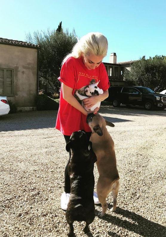 Lady gaga con sus perros.