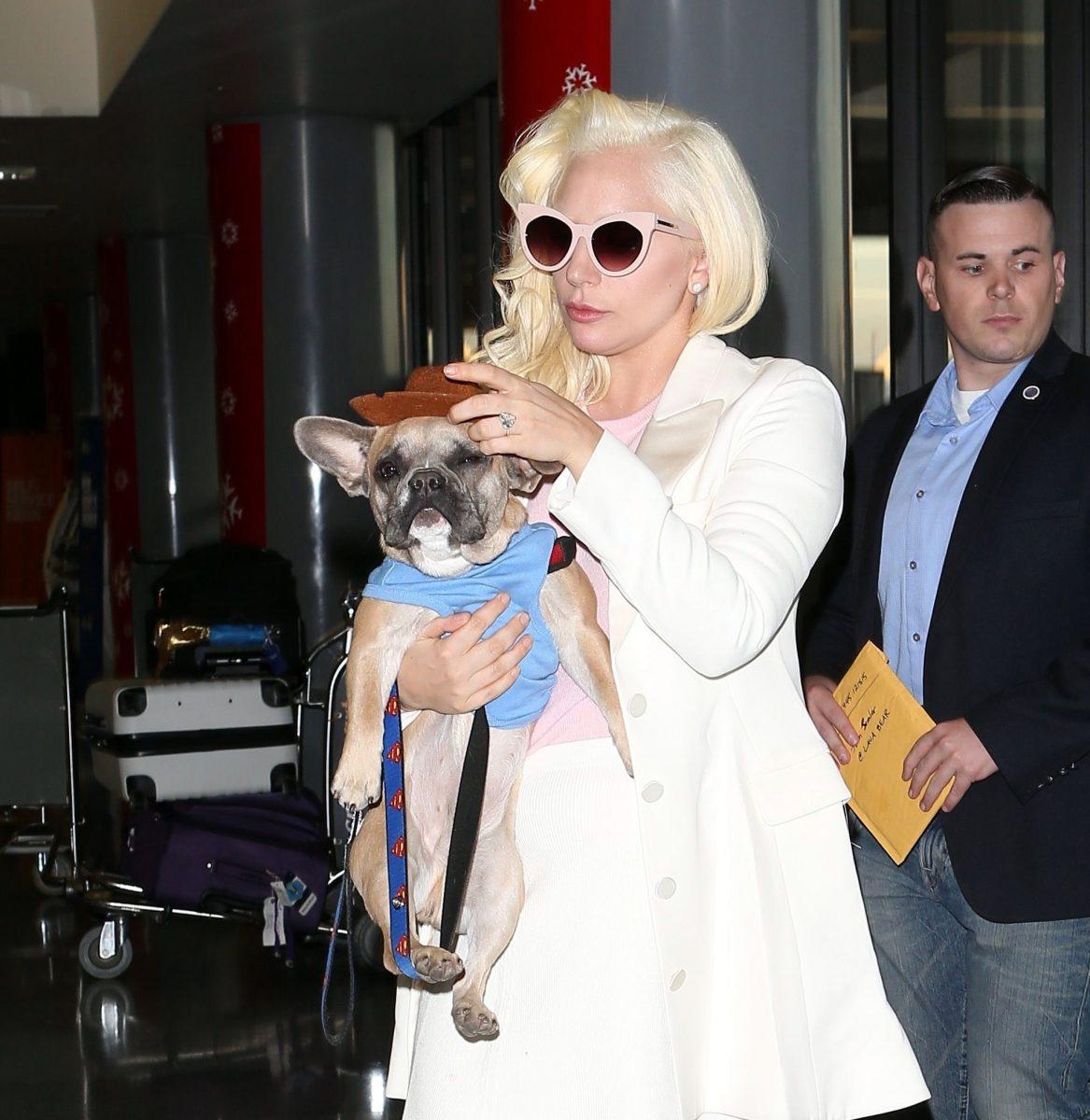Lady Gaga y sus perros juntos de nuevo
