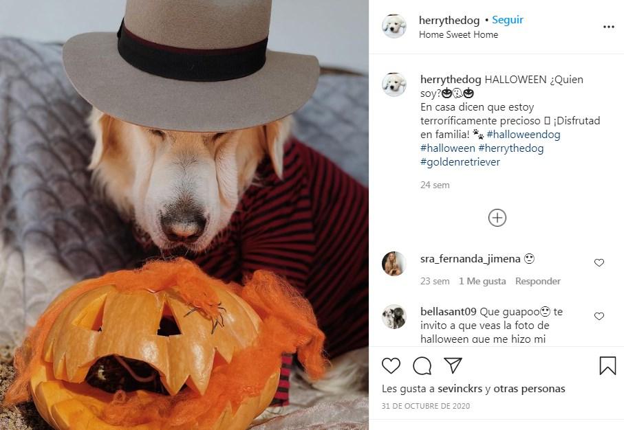 El Perro de Andrés Velencoso tiene cuenta Instagram